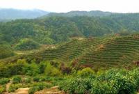 來貴溪這里,邂逅美麗茶山
